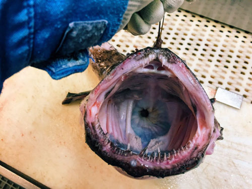 Most Terrifying Creatures Of The Deep Sea