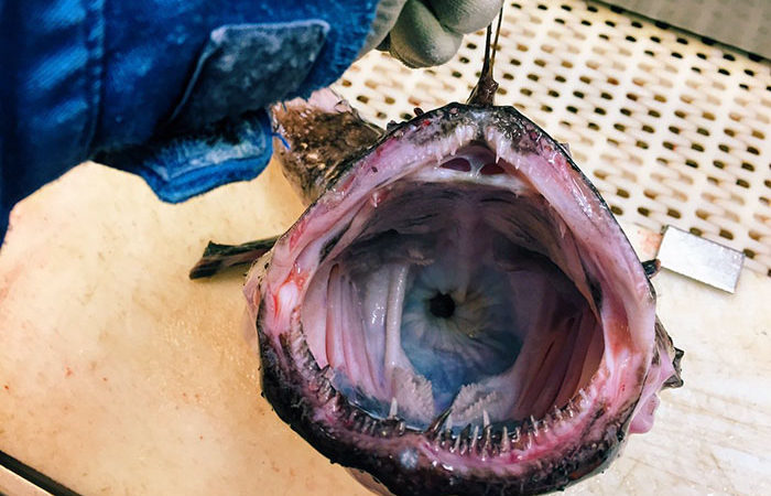 Russian Fisherman Reveals The Most Terrifying Creatures Of The Deep Sea