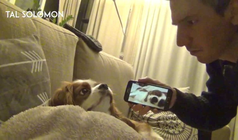 Dog Giving Funny Reactions When His Owner Realized Him That He Is Snoring! Very Funny.