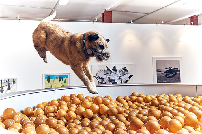 world first dog art exhibition dominic wilcox london 2 - Take A Look Around The World's First Art Exhibition For Dogs