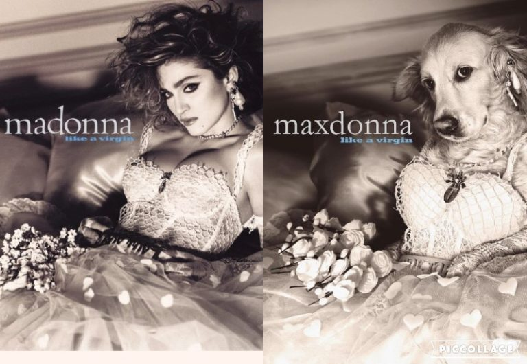 Dog in Madonna's iconic photos