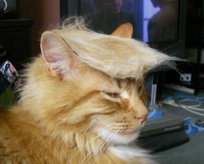 donald trump cat1 - Funny Instagram Trend-Style Your Cat Like Donald Trump