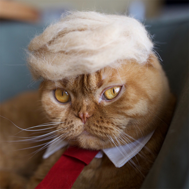 donald trump cat13 - Funny Instagram Trend-Style Your Cat Like Donald Trump