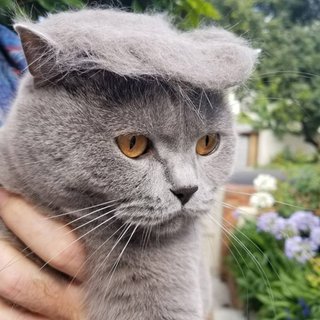 donald trump cat14 - Funny Instagram Trend-Style Your Cat Like Donald Trump