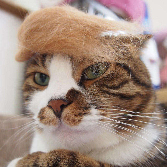 donald trump cat17 - Funny Instagram Trend-Style Your Cat Like Donald Trump