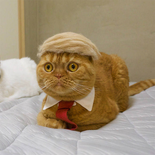 donald trump cat2 - Funny Instagram Trend-Style Your Cat Like Donald Trump