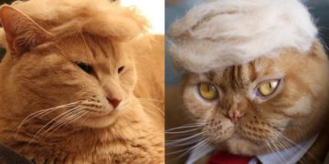 trump cats 360x180 - Funny Instagram Trend-Style Your Cat Like Donald Trump