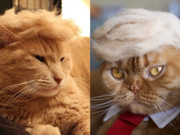 trump cats 360x270 - Funny Instagram Trend-Style Your Cat Like Donald Trump