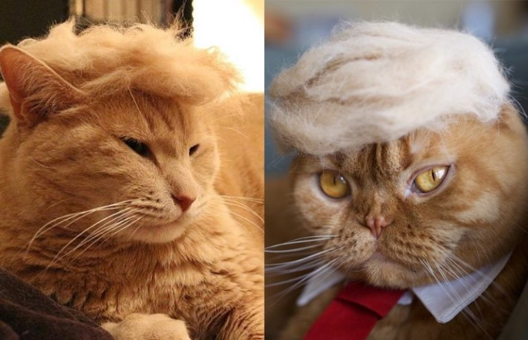 trump cats 768x495 - Funny Instagram Trend-Style Your Cat Like Donald Trump
