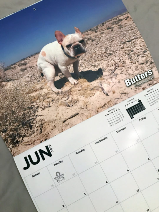 pooping pooches4 - The Pooping Pooches Dog Calendar 2019 Is Out Now