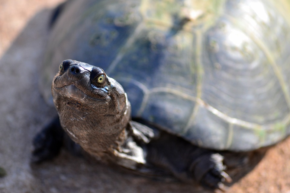 terrapin 411853 960 720 - Doctors In Spain Find A Turtle Inside Woman's Vagina After Having Pain