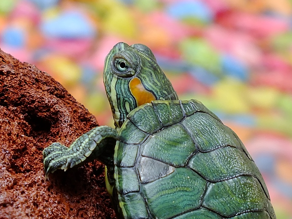 turtle 182121 960 720 - Doctors In Spain Find A Turtle Inside Woman's Vagina After Having Pain