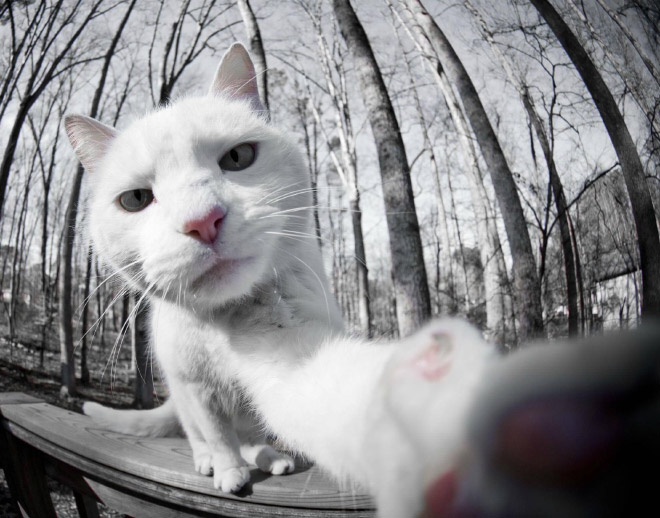 Cats Took Better Selfies Than Human