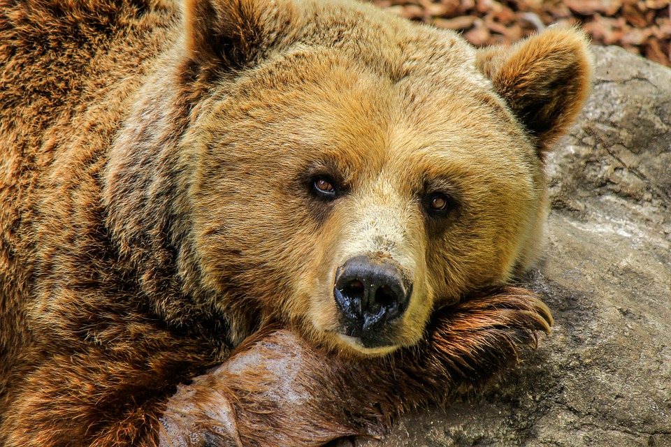 In 2008 A Bear Was Sued For Stealing Honey