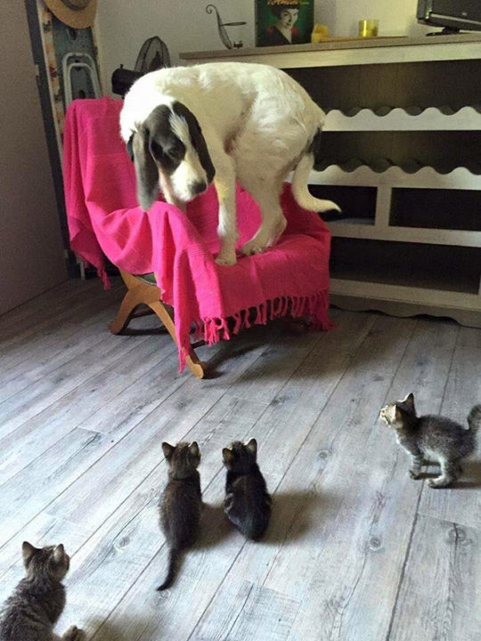 Dogs Who Are Terrified Of Cats